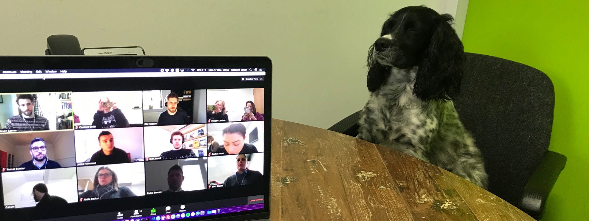 A laptop on a desk with a dog sitting on a seat watching the screen.